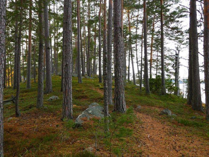 Med skogen som klassrum
