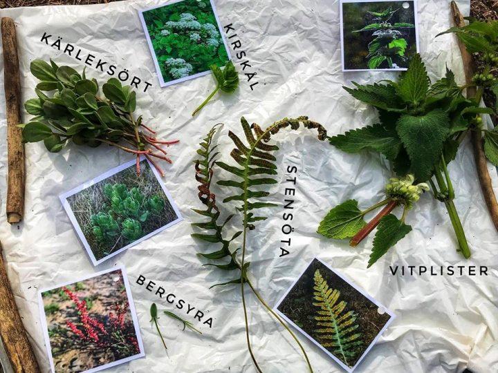 Vilda växter – smaka känna lukta