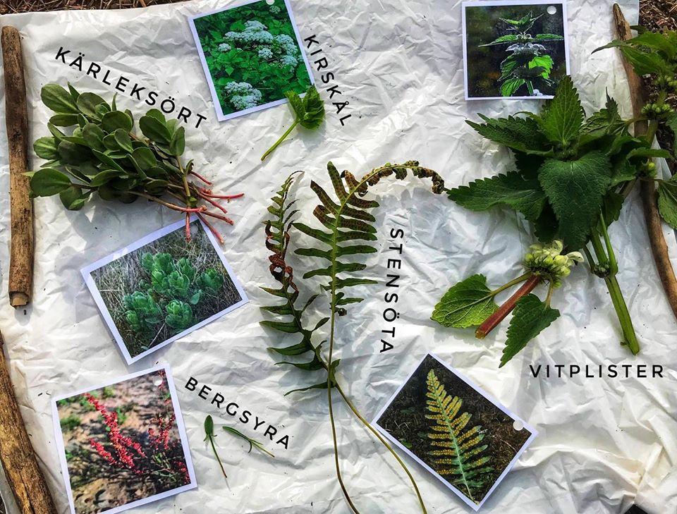 växter ätliga